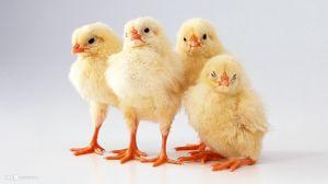My little chickens!!!