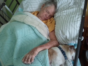 The last photo taken of my dad before he died. Arnold asleep at his side.